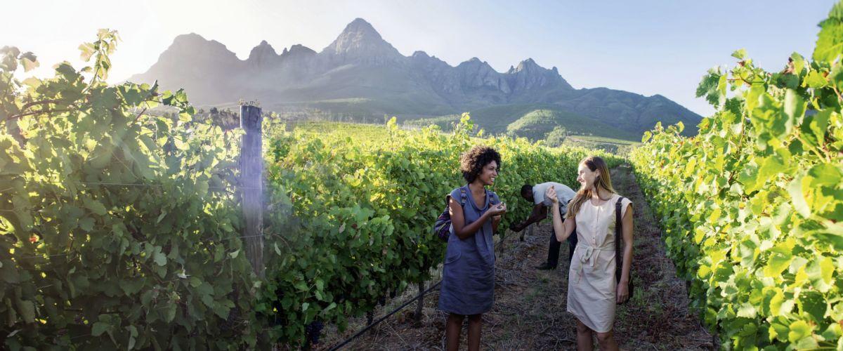 Südafrika – Weingebiet © www.dein-suedafrika.de