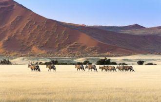 ossusvlei, Herde © Shutterstock/Tiago Lopes Fernandez