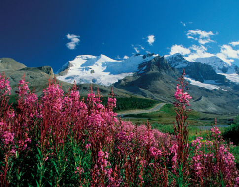 Westkanada_Alberta_flowers (c) Poppe Reisen