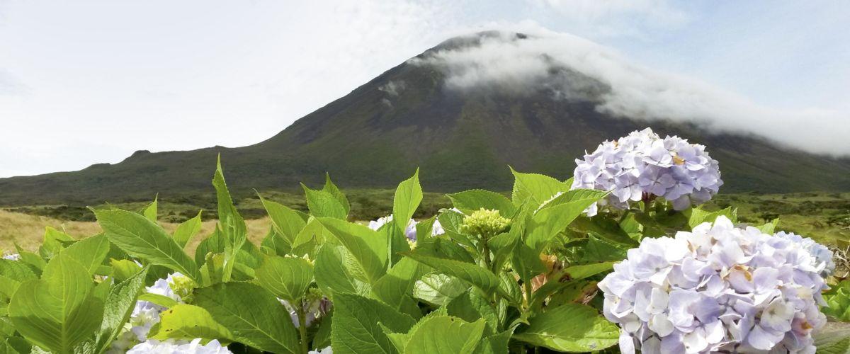 Pico (c) Fotolia Schlierner