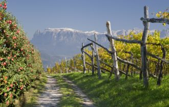 Südtirol (c) Fotolia