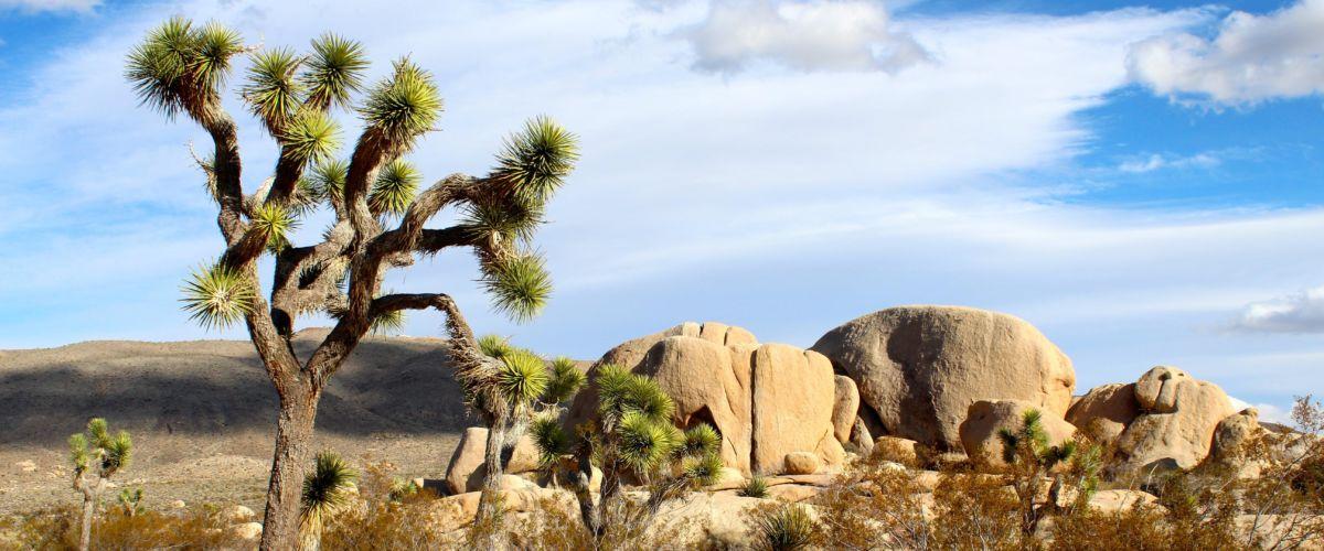 joshua-tree-national-park (c)pixabay