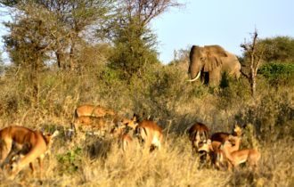 Elefant in Afrika ©reisewelt Teiser & Hüter GmbH