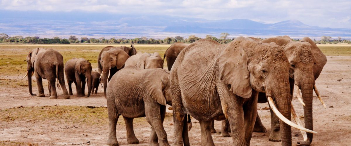 Elefanten ©reisewelt Teiser & Hüter GmbH