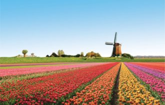 Holland zur Tulpenbluete (c) WINK