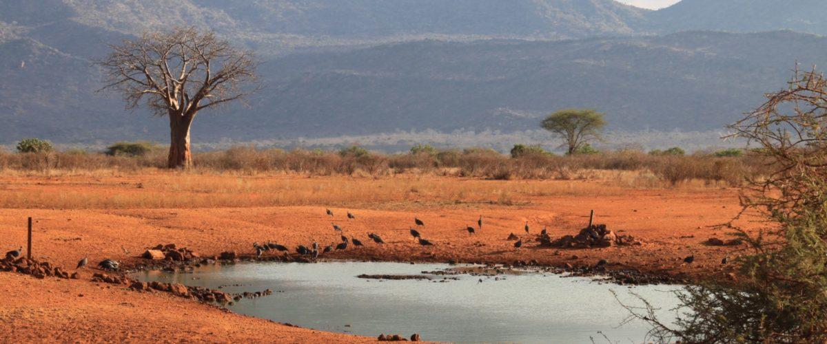 Wasserloch in Kenia ©reisewelt Teiser & Hüter GmbH