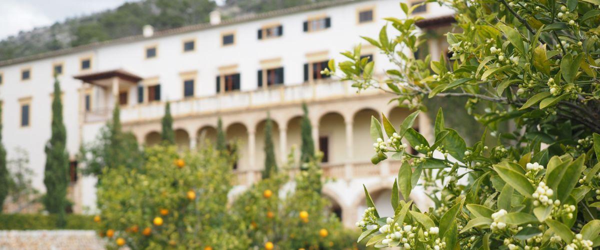 Mallorca Genuss (c) reisewelt Teiser + Hüter