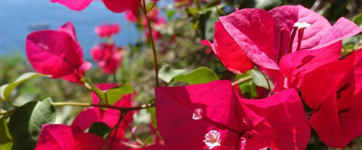 Blumen ®pixabay