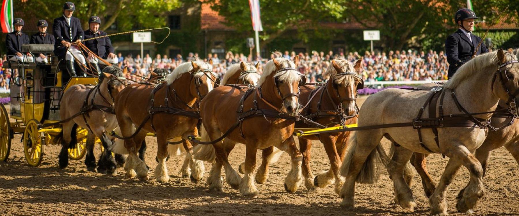 (c) Spaß am Pferd