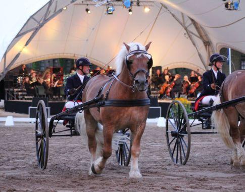 symphonie6 (c) Spaß am Pferd
