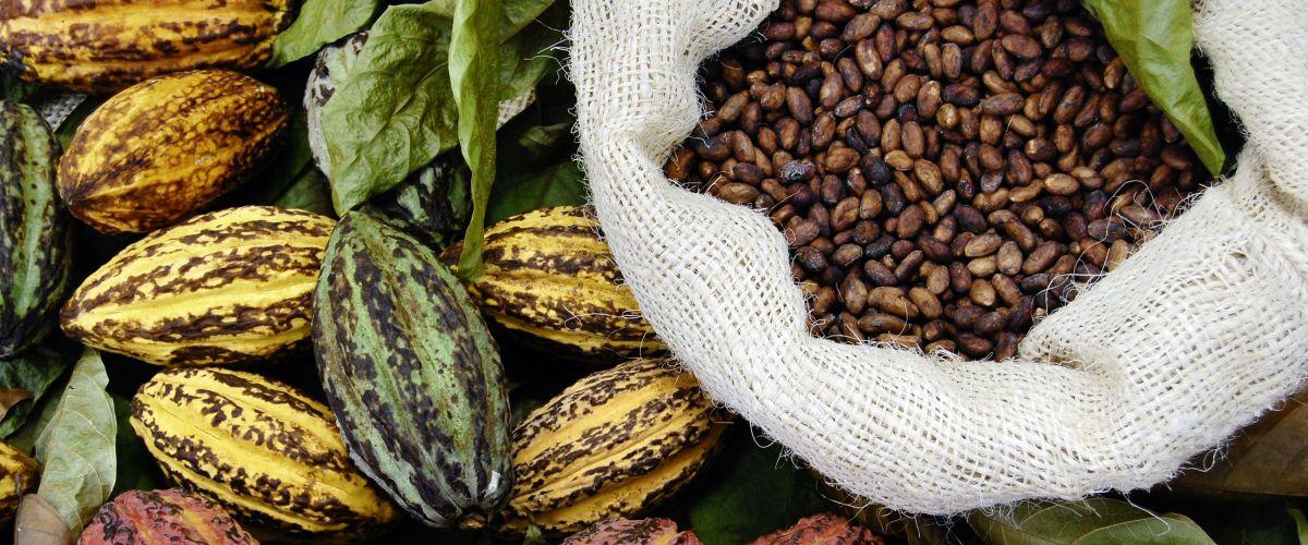 Kakaobohnen © Fotolia Yai