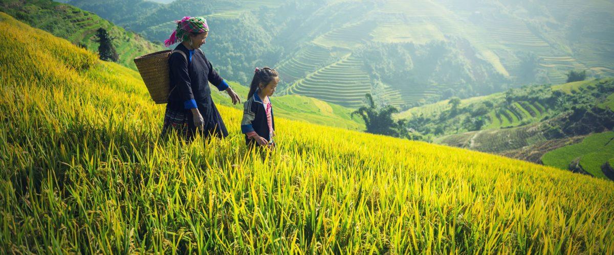 Indonesien Bali Reis (c) Pixabay