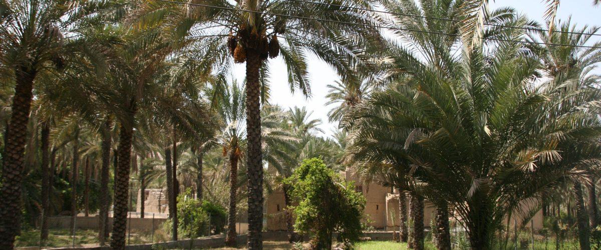 Oman Jebel Akhdar Nizwa Birkat Al Mauz Old Village (c) Poppe Reisen