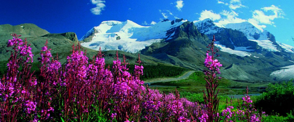 Westkanada Alberta flowers (c) Poppe Reisen