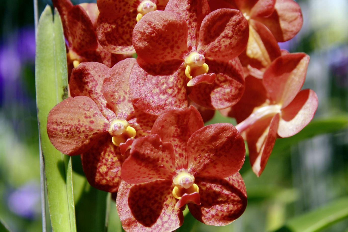 Orchideen (c) Marco Polo Reisen