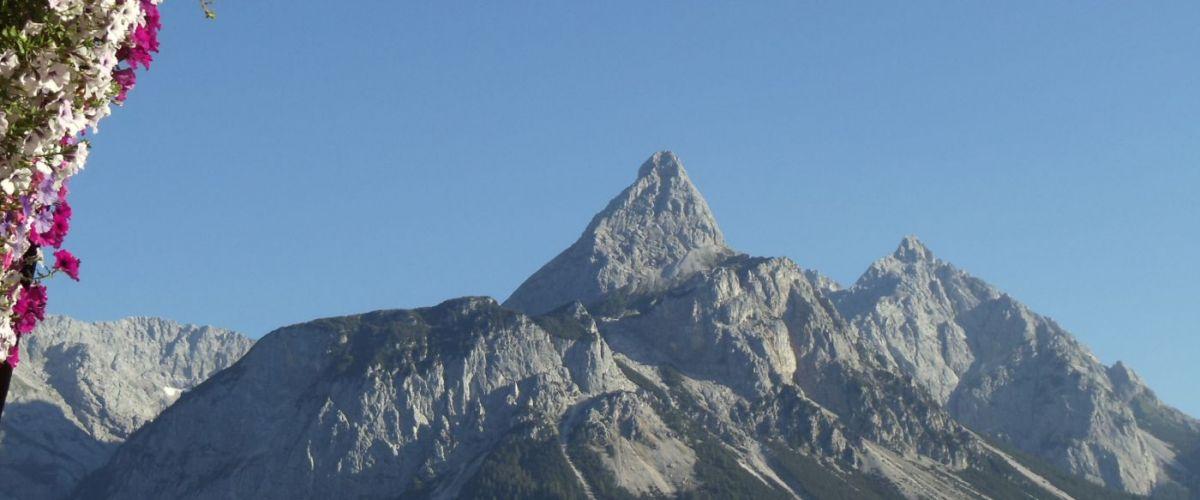 Zugspitze_Panorama_Blumen