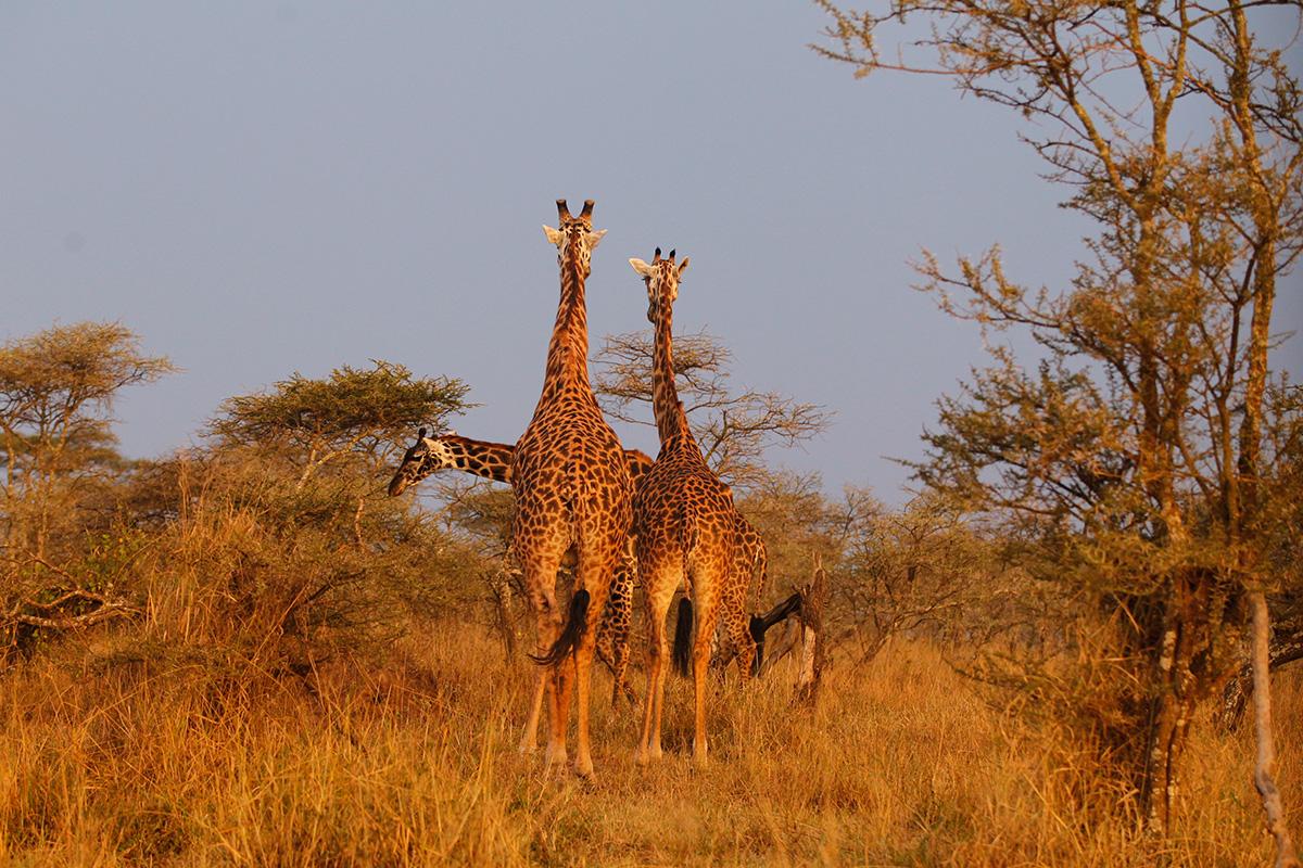 Tansania © Reisewelt Teiser & Hüter GmbH