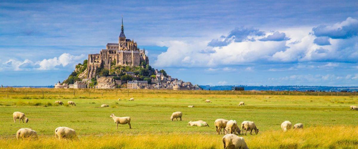 Le Mont Saint-Michel with sheep grazing on green meadows in summ (c) Globalis Erlebnisreisen