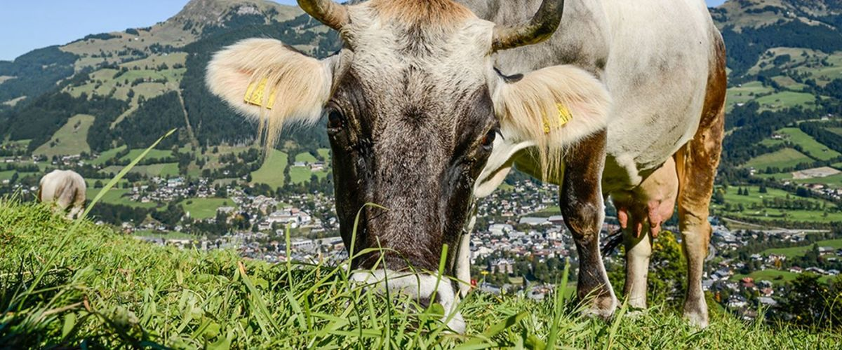 kat-walk-weitwanderweg-in-den-kitzbueheler-alpen ©Vonier Peter - PV Werbung und Marketing