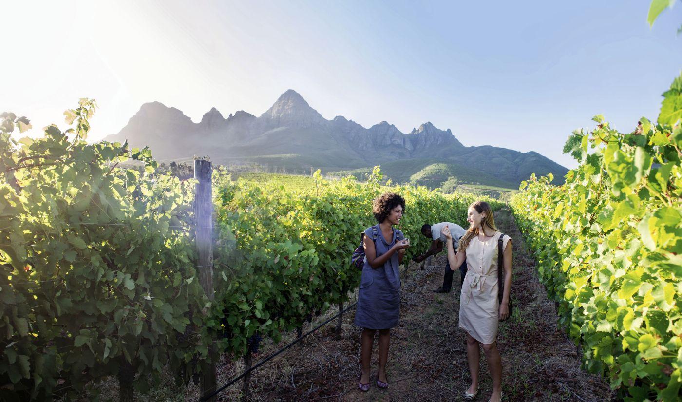 Weingebiet (c) Marco Polo Reisen GmbH www dein-suedafrika de