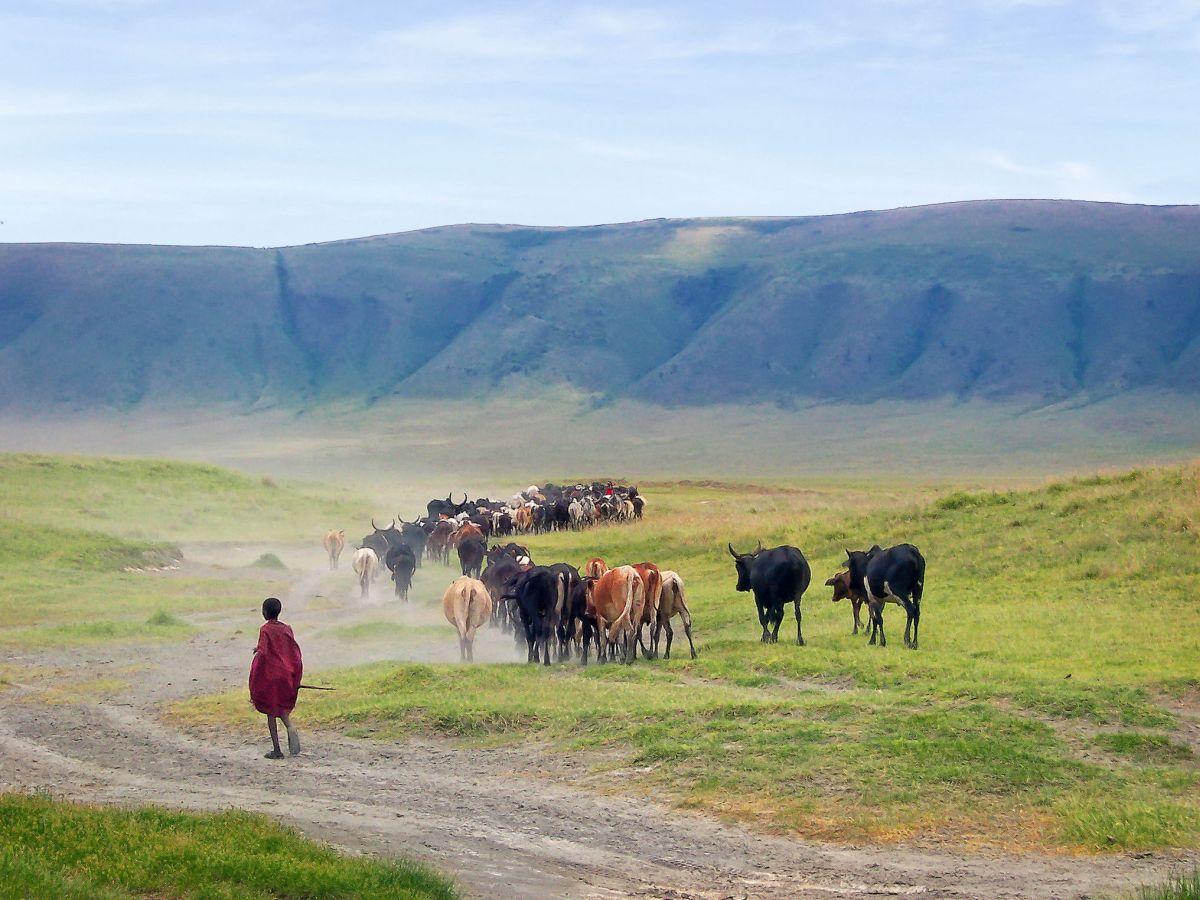 Viehherde © Fotolia_Thomas Pozzo