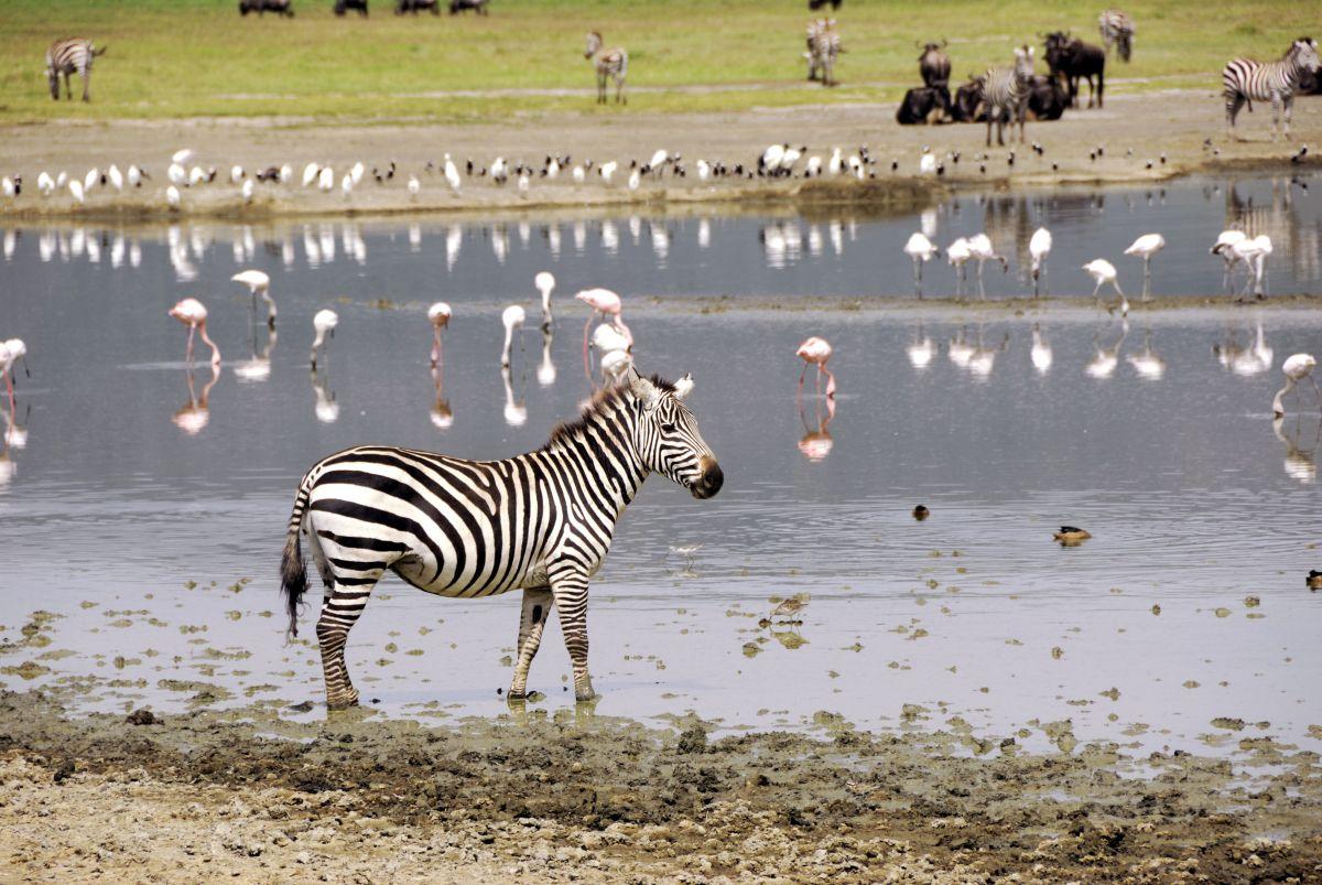 Zebra_Flamingos © Fotolia_Oleg Znamenskiy