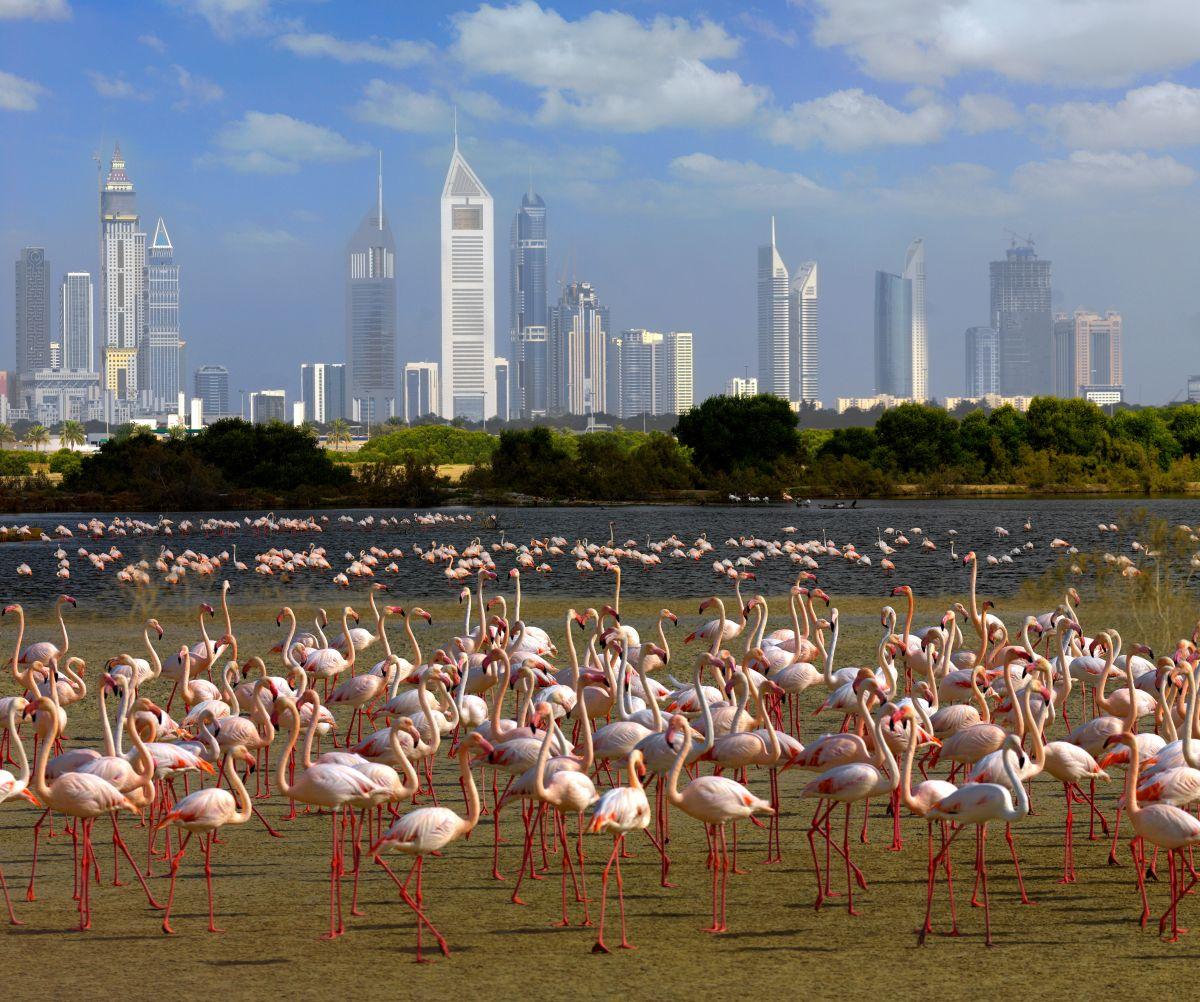N Pink Flamingos vor Dubai Skyline Freigabe DTCM