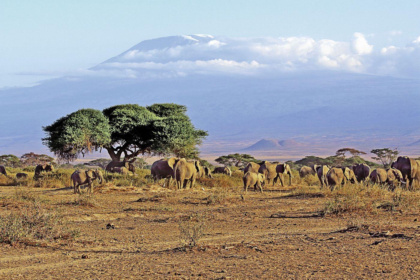 Elefanten (c) Guido Bürger