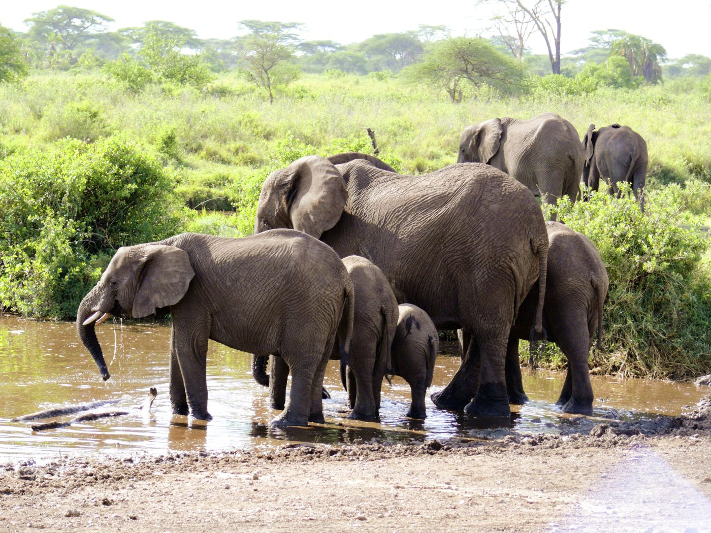 Elefanten (c) Marco Polo Reisen