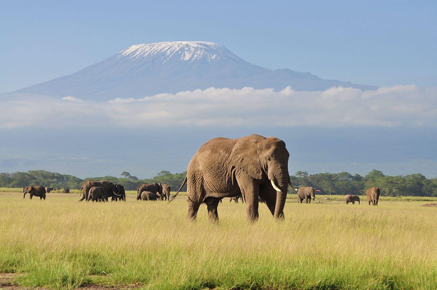 Elefanten (c) Shutterstock Prasanth Aravindakshan