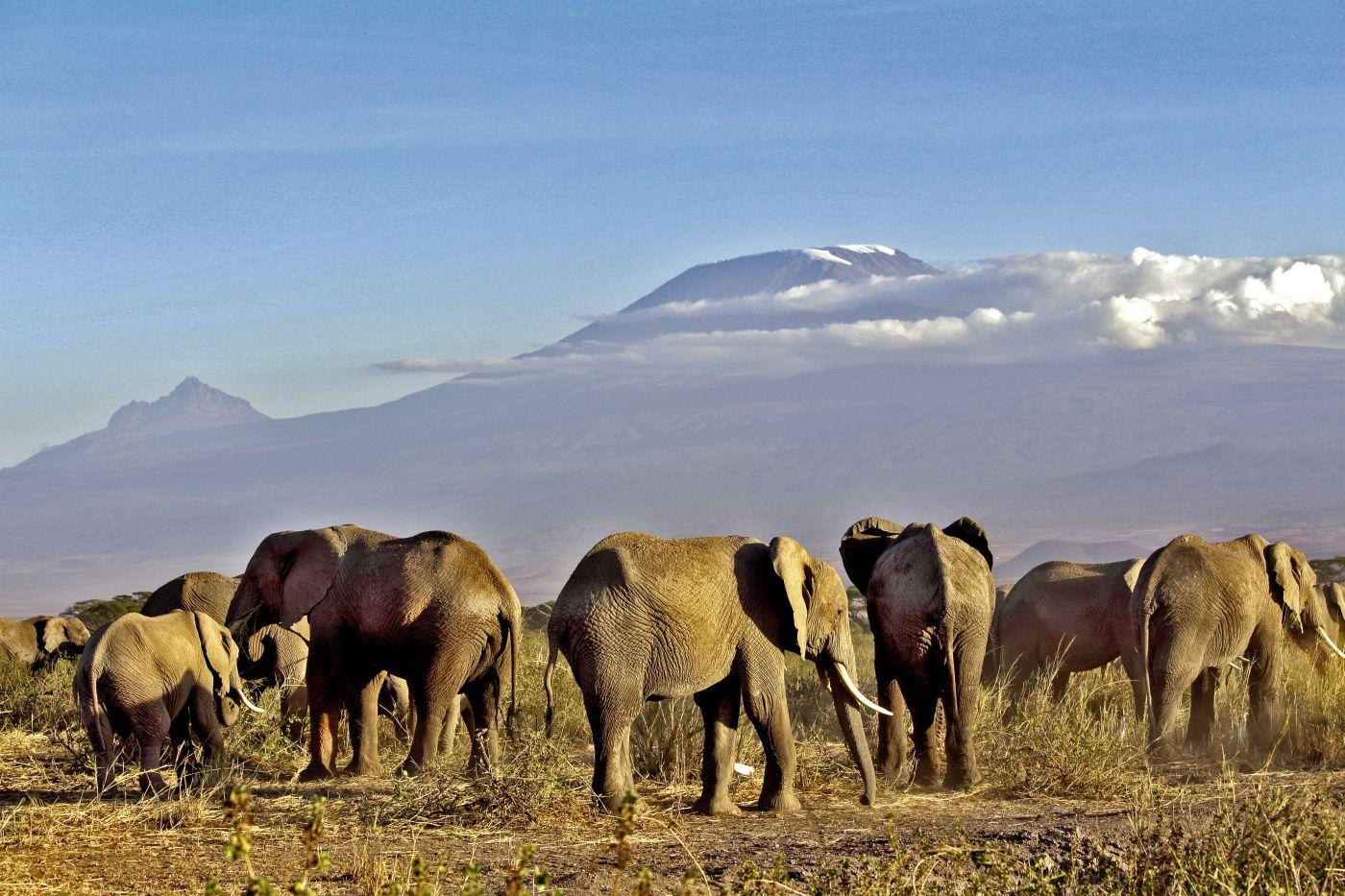 Elefanten(c) Guido Bürger