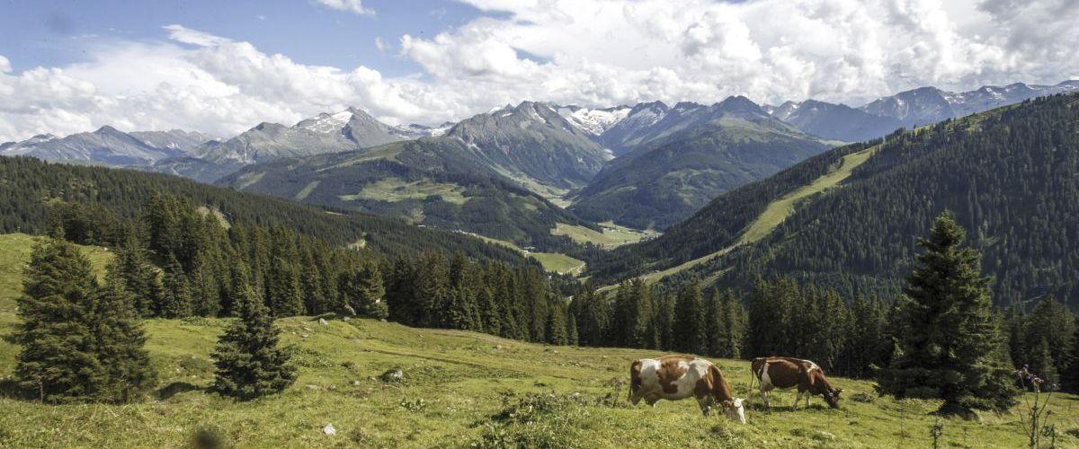 Almlandschaft Gerlos ©Zillertal Tourismus GmbH, Marco Rossi