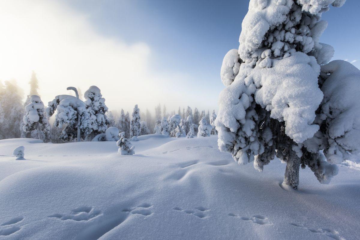 Winterlandschaft © Marco Polo Reisen_VisitFinland_Marko Junttila