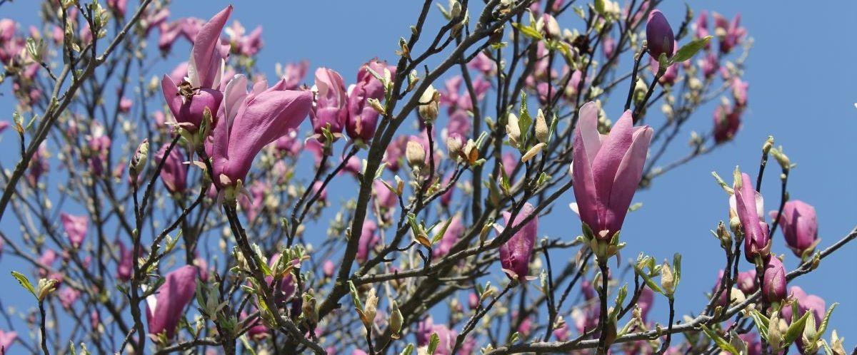 eb-piemont-rundfahrt-magnolie-15(c)eurobike