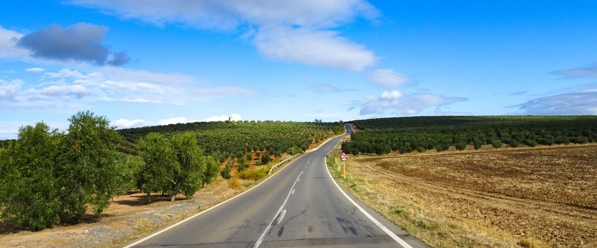 eurobike-radreise-andalusien-landstraße-olivenhaine