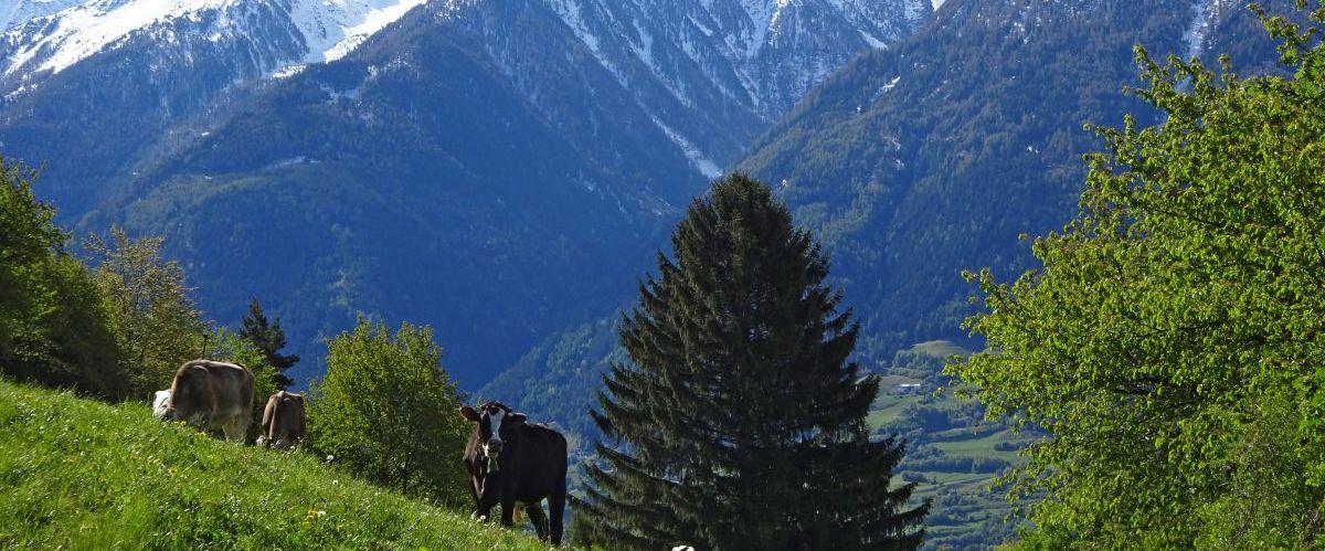 eurohike-wanderreisen-suedtirol-via-claudia-panorama(c)eurohike