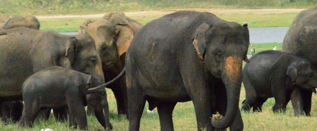 Sri Lanka_Minneriya_Copyright Sameera Gunathillake(c)poppe-reisen