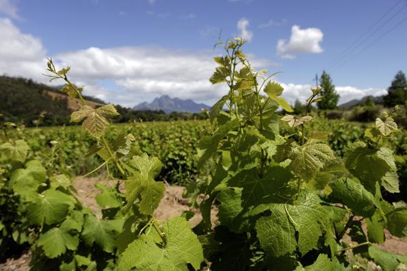 Wein(c)marco-polo-reisen
