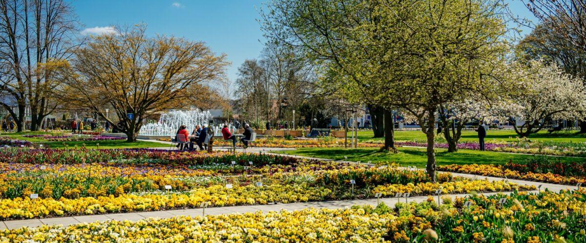 Blütenpracht zum Start (c) BuGa Erfurt